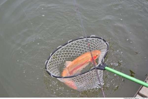 На Сенежском озеое популярностью пользуется рыбалка
