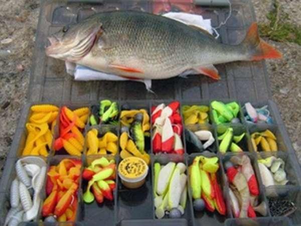 Характеристика рыбы окунь