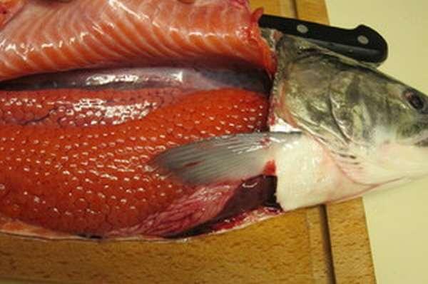 Чем полезна икра красной рыбы