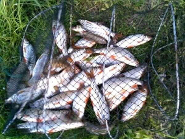 Выбор водоема и хорошего места для рыбалки
