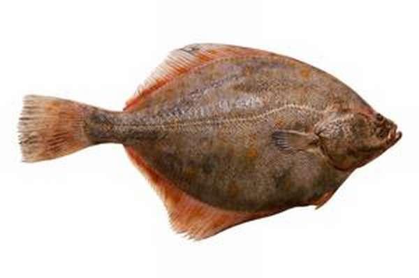 Как приготовить рыбу камбалу