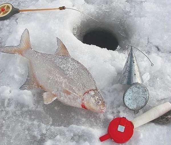 Рецепты зимней прикормки для леща и особенности прикармливания леща зимой