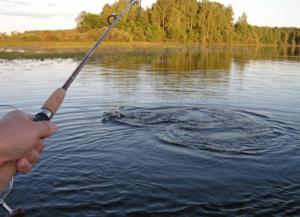 Как выбрать место для рыбалки в Тверской области