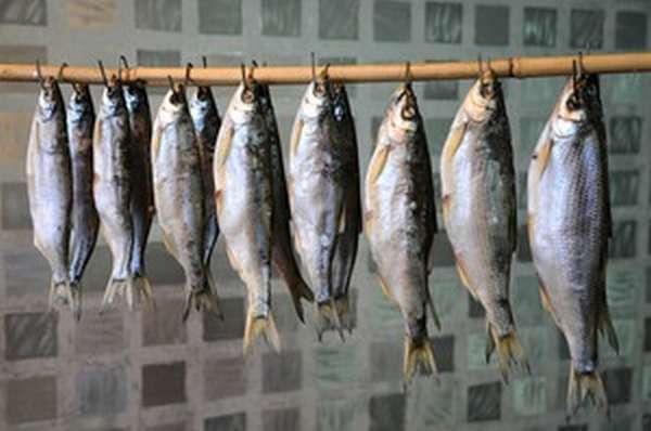 Польза рыбы шамайка