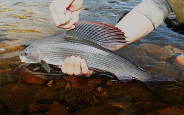 Рыбалка в Финляндии:
