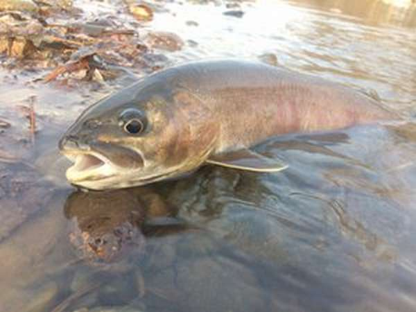 Рыбалка в Приморье зимой