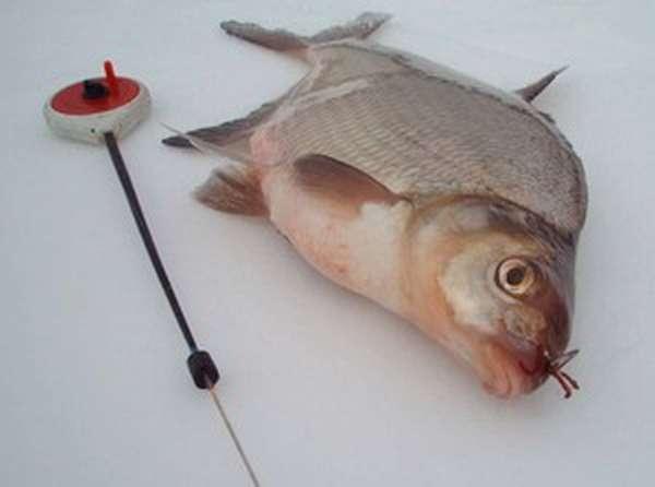 Леска для зимней рыбалки на окуня