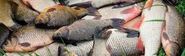 График и прогноз клева рыбы