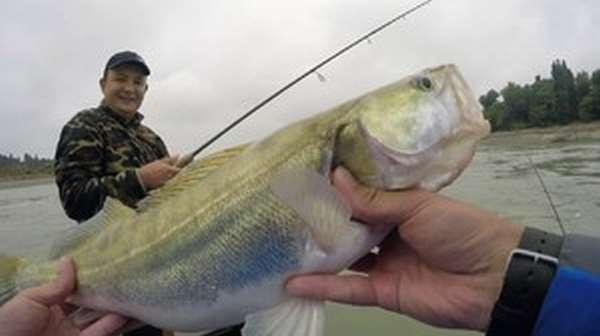 Платная рыбалка на кубани