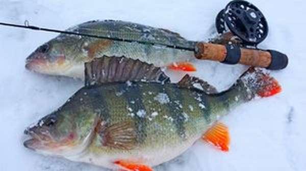 Перспективное время для рыбалки