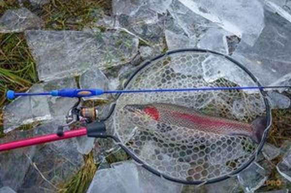 Зимняя удочка для ловли форели
