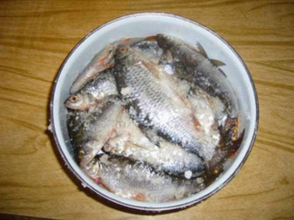 Вкусные рецепты соления рыб