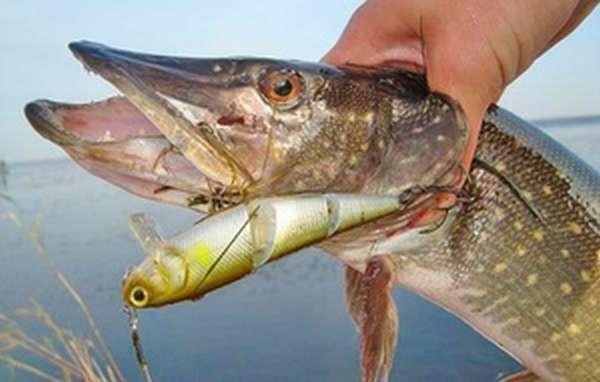 Как использовать воблер при ловле рыбы