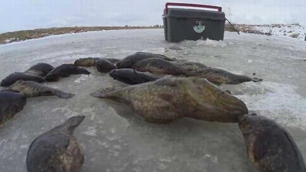 рыбалка на головешку зимой