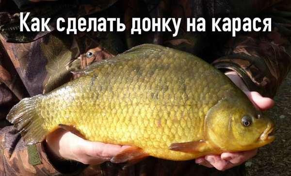Донка на карася: подготовка снасти своими руками нюансы ловли