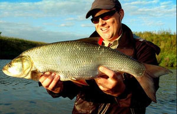 Как ловить рыбу жерех