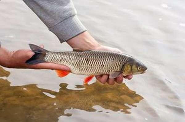 Что нужно знать рыбаку