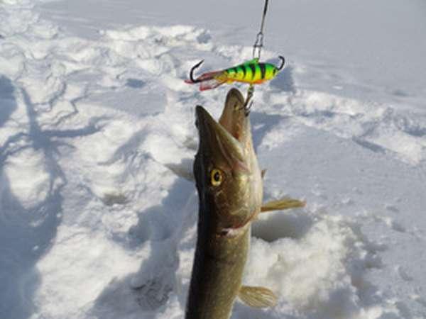 Как поймать щуку зимой