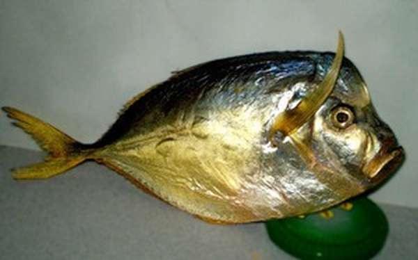 Какие рыбы плоские по форме