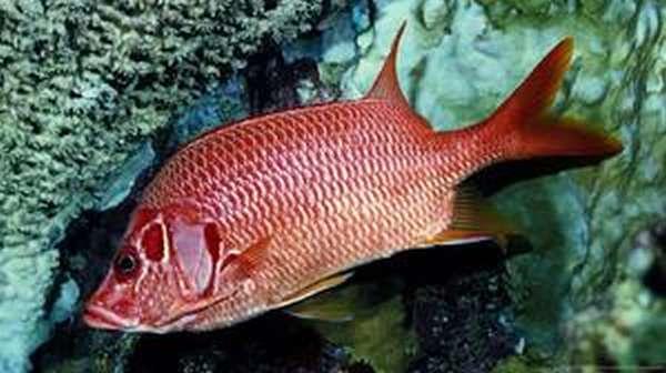Рыбы долгожители