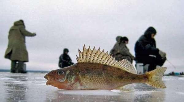 Рыбалка на ерша