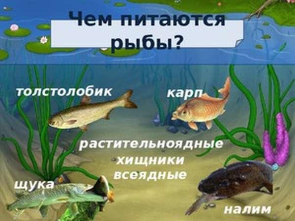 Другие признаки особенностей рыб