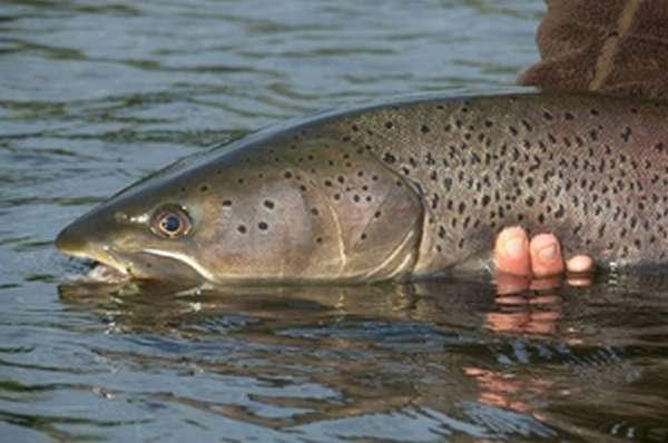 Трофейная рыбалка: Таймень