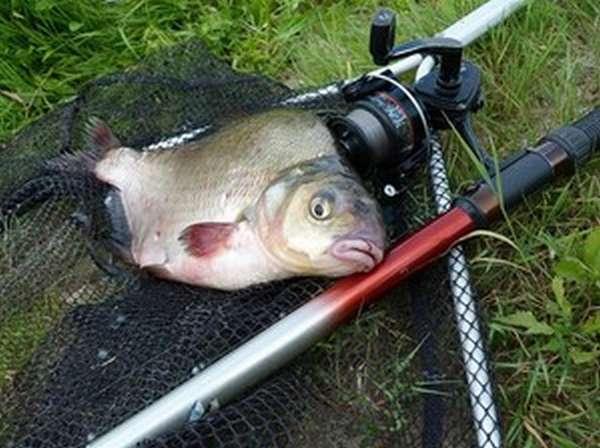 Ловля мирной рыбы весной
