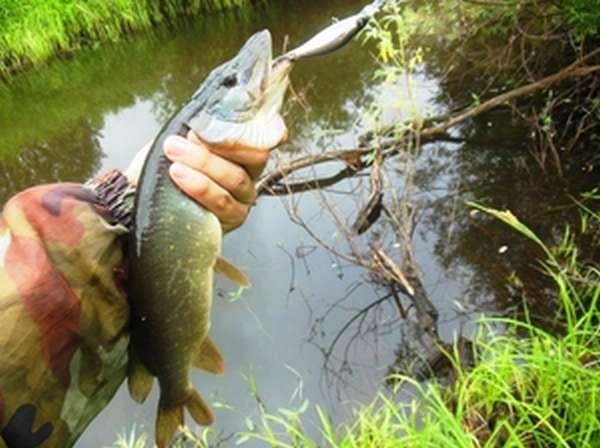Рыбалка в Муроме