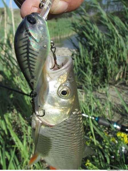 Сал рыбалка