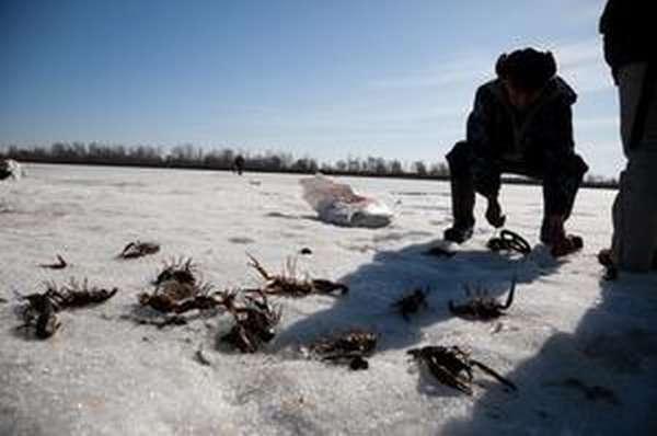 Особенности зимней ловли раков