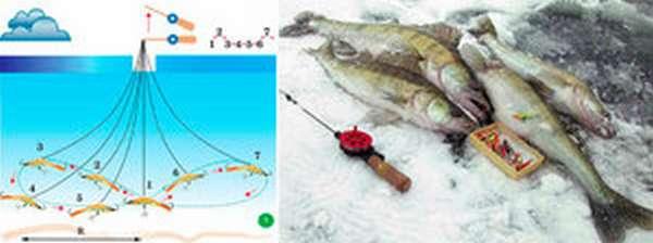 Как правильно ловить судака