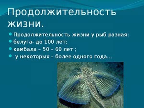 Сколько живут речные рыбы