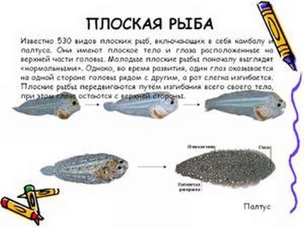Разновидности рыб в природе