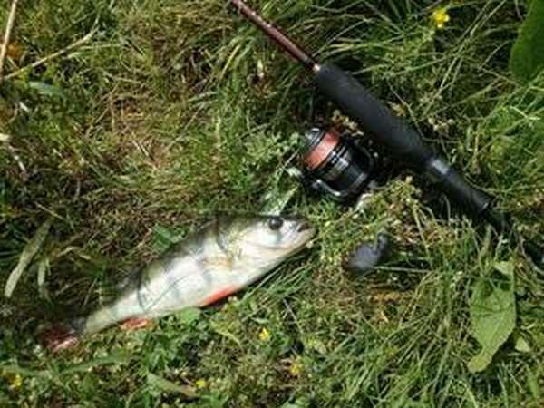 Платная ловля рыбы в Рязанской области