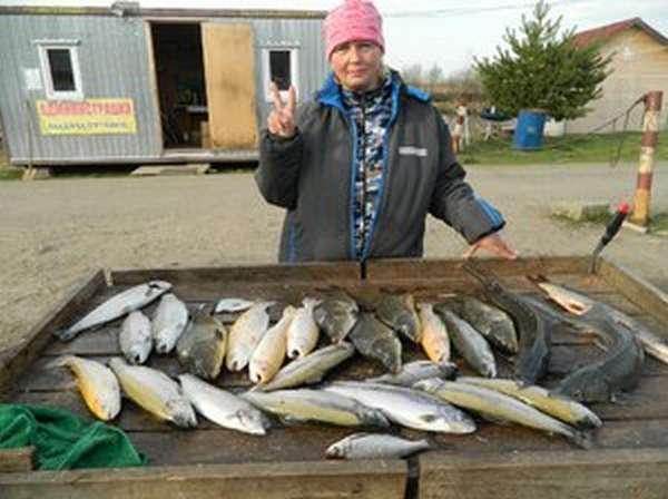 Рыбы в водоемах Стрелецкого ручья