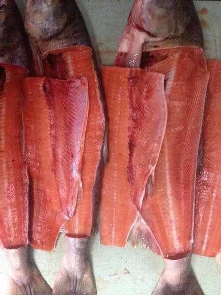Описание рыбы кеты