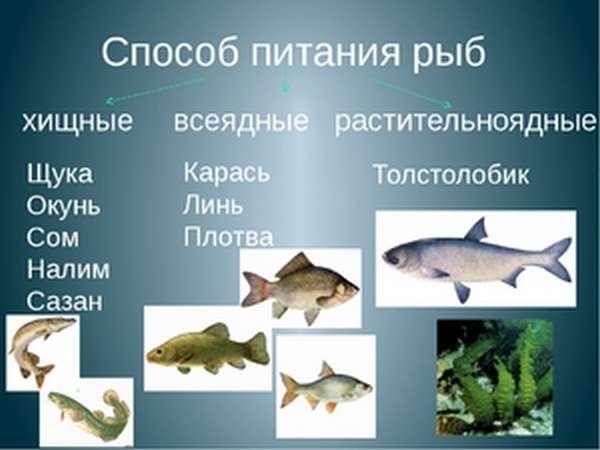 Пищевые предпочтения водных рыб