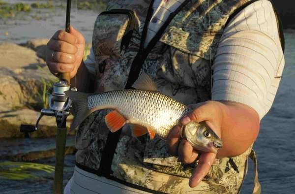 Ловля рыбы вырезуб