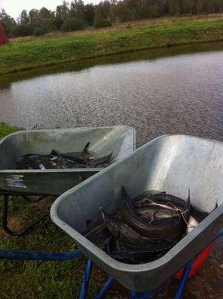 Рыбалка в Чехове голд фиш