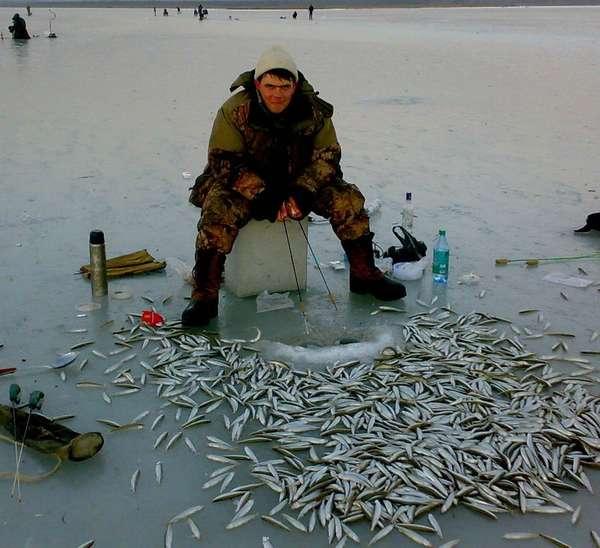 Рыбы республики коми