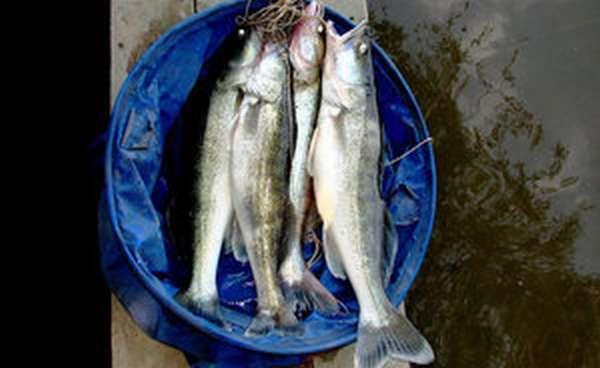 Как рыбачить с берега реки