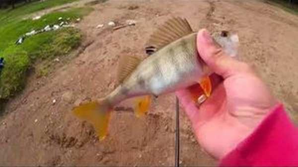 Секреты ловли рыбы