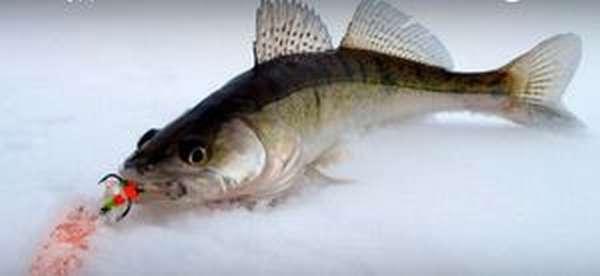 Как ловить рыбу на мормышку - фото