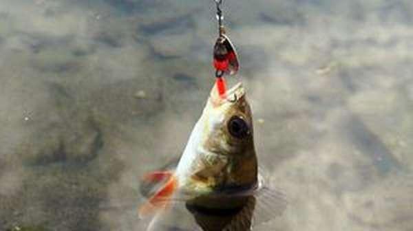 Рыбалка на окуня