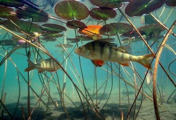 Типы питания у рыб