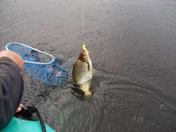Ловля леща летом в озере в дождь