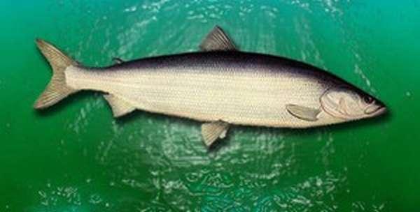 Особенности ловли рыбы