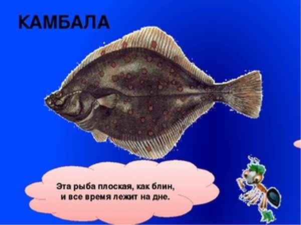 Плоская и круглая рыба